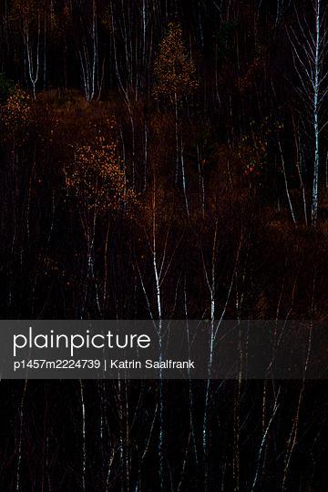 Dunkles Moor - p1457m2224739 von Katrin Saalfrank