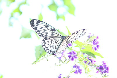 Schmetterling - p045m907326 von Jasmin Sander