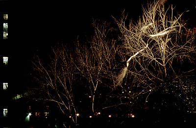 Trees at night - p3881597 by mary gaudin