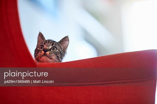 p429m1569485 von Matt Lincoln