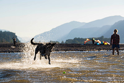 Woman with dog playing in water - p343m1578129 by Mike Schirf