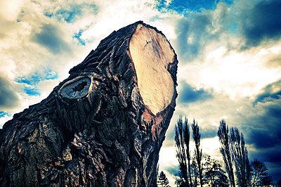 Unheimlicher Baumstumpf unter Wolkenhimmel - p416m784672 von Thomas Schaefer