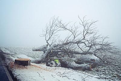 Déforestation - p992m1057140 by Carmen Spitznagel
