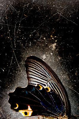Butterfly - p451m908133 by Anja Weber-Decker
