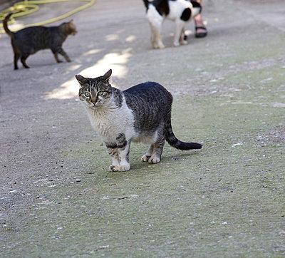 Stray cat - p6060626 by Iris Friedrich