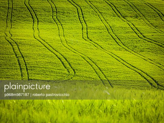 Tractor's tracks in the cornfield near Pienza - p968m987187 by Roberto Pastrovicchio