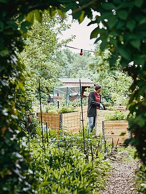 Woman gardening - p962m2175424 by Robert Schlossnickel