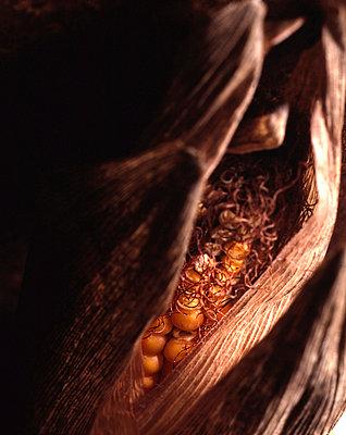 Maiskolben - p9791875 von Zimmermann photography