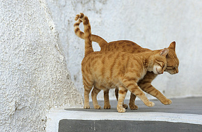 Two cats in Greece - p3300467 by Harald Braun