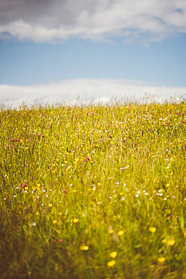 Bunte Blumenwiese - p432m2185541 von mia takahara