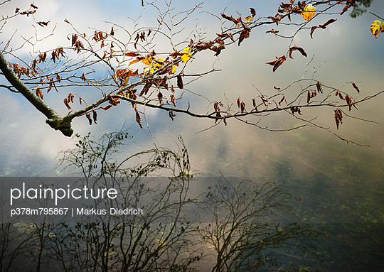 Branch and reflections - p378m795867 by Markus Diedrich