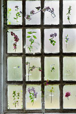 Frühlingsfenster - p1348m1496965 von HANDKE + NEU