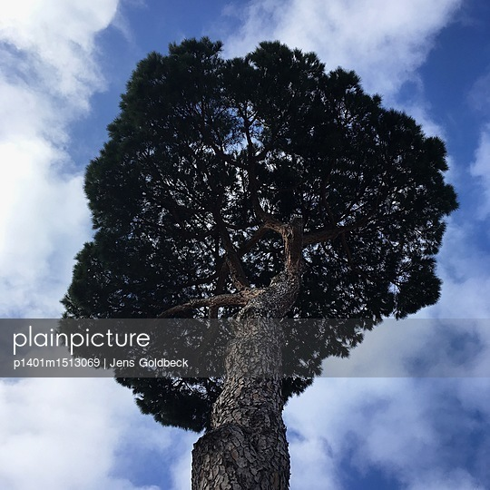 Alter Baum - p1401m1513069 von Jens Goldbeck