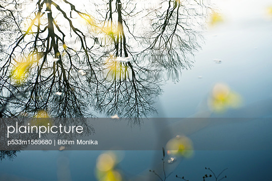 Das erste Frühlingsgrün - p533m1589680 von Böhm Monika