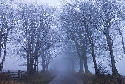 Foggy winter morning along a tree lined lane near Northmoor Common, Exmoor National Park, Somerset, England, United Kingdom, Europe - p871m711367 by Adam Burton