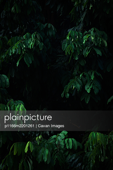 p1166m2201261 von Cavan Images