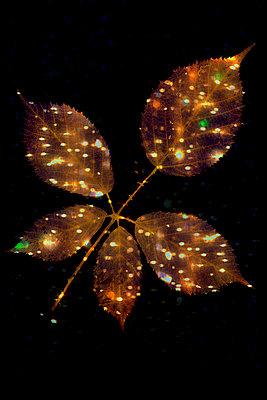 Leaves of dog rose bush - p1028m2290888 by Jean Marmeisse