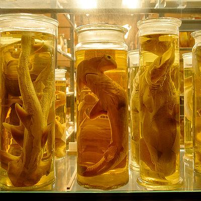 Meerestiere in Formaldeyd - p1154m2297718 von Tom Hogan