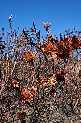 Wilted plant - p1640m2245948 by Holly & John