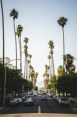 Palm Tree Lined Street, Los Angeles, California, USA - p694m1175511 by Eric Schwortz
