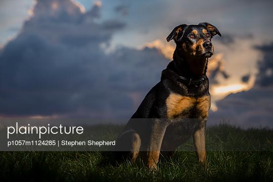 Aufmerksam - p1057m1124285 von Stephen Shepherd