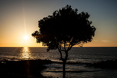 Sunset with tree - p1291m1465781 by Marcus Bastel