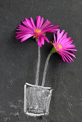Pinke Blüten  - p450m1030681 von Hanka Steidle