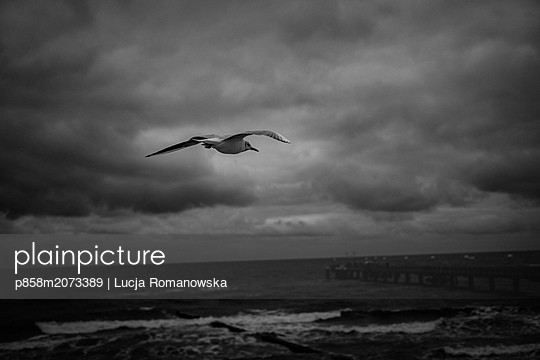 Möwe im Flug - p858m2073389 von Lucja Romanowska