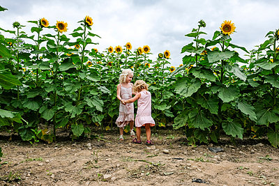 Sisters holding hands while playing against sunflower field - p1166m1545577 by Cavan Social