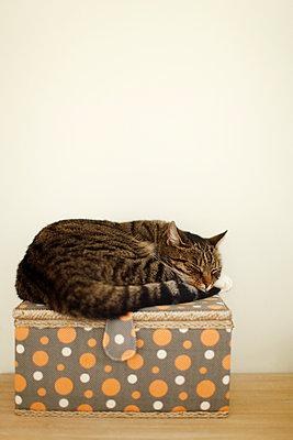 Sleeping cat - p249m891124 by Ute Mans