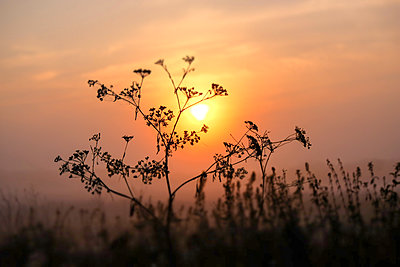 Sonnenuntergang - p739m1497435 von Baertels