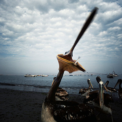Ica bei Peru - p8440042 von Markus Renner