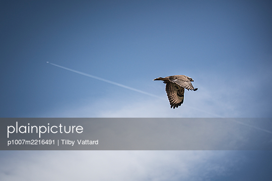 Bird and plane in the sky - p1007m2216491 by Tilby Vattard