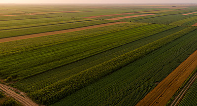 Serbia, Vojvodina, Aerial view of corn, wheat and soybean fields in the late summer afternoon - p300m2012911 von oticki