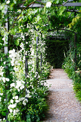 Trellis with white flowers London Great Britain - p5281820 by Pernilla Hed