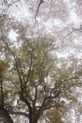Tree canopy - p335m1083833 by Andreas Körner