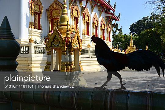 Hahn am Wat Rajthanee, Neu- Sukhothai, Thailand - p1316m1161181 von Thomas Stankiewicz