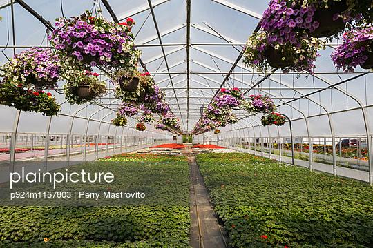 p924m1157803 von Perry Mastrovito