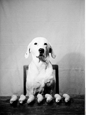 Hund - p1205m1144936 von Regina Anzenberger
