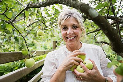 Smiling woman picking apples - p312m1472040 by Karl Forsberg