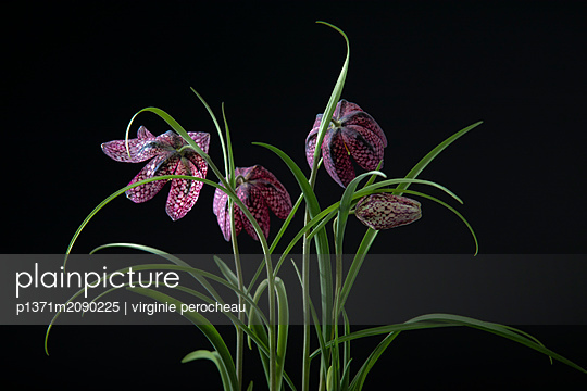 p1371m2090225 by virginie perocheau