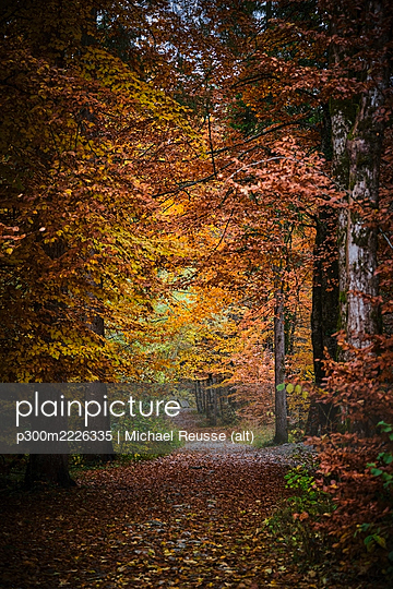 Footpath in autumn forest - p300m2226335 by Michael Reusse (alt)
