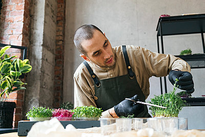 Man cutting microgreens with scissors on table - p300m2180708 by Vasily Pindyurin