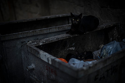 Cat on a trash - p1007m1134849 by Tilby Vattard