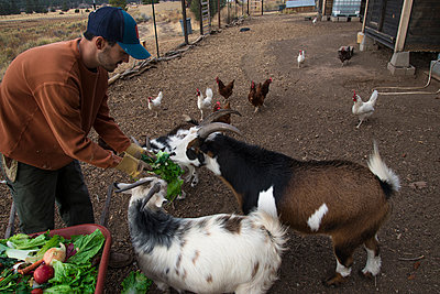 Man feeding goats - p1166m1530674 by Cavan Images
