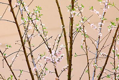 Blatt und Blüte - p606m822720 von Iris Friedrich