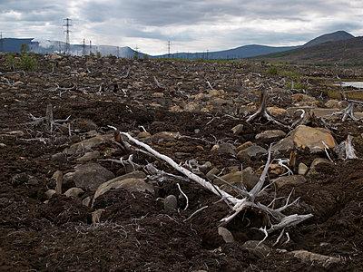 Dead tree nearby a factory - p1216m2187277 by Céleste Manet