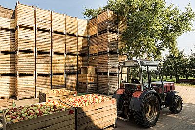 Apfelernte Altes Land - p1222m1026373 von Jérome Gerull