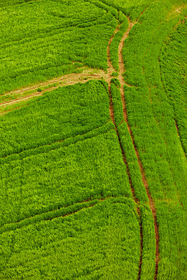 Tractor tracks in corn field - p248m908434 by BY