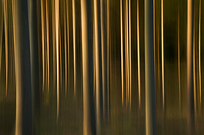 Abstract forest - p5750171f by Sven Halling